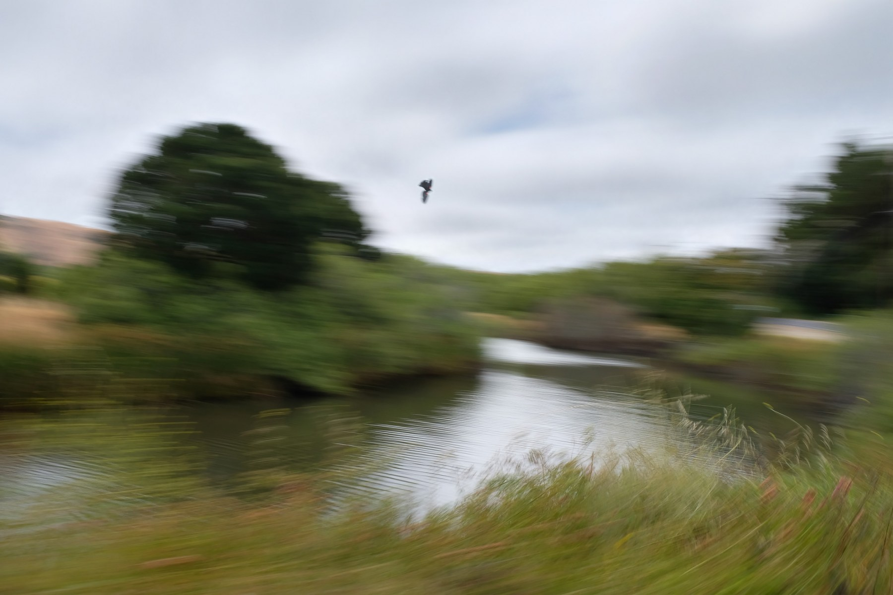"""Faster but Slower, """"Inverness Marsh"""""""