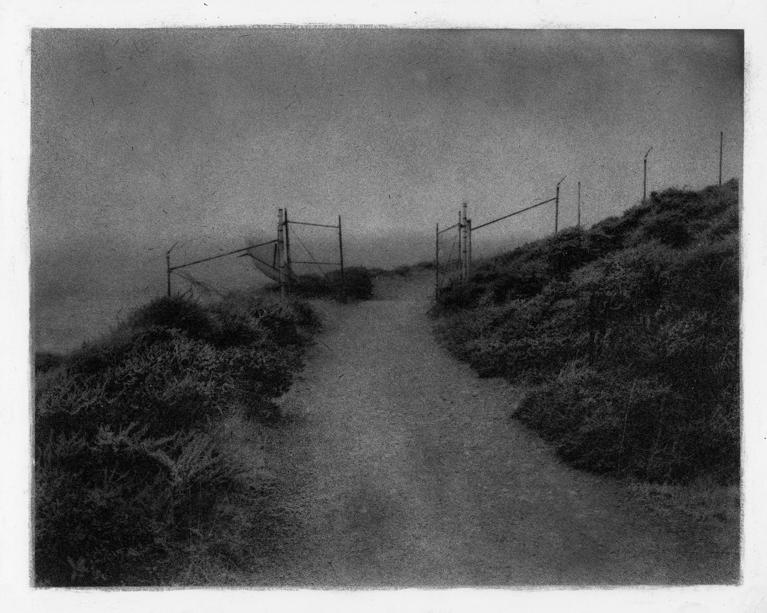 """Marin Headlands Trail 01,"" 2016. Bromoil"