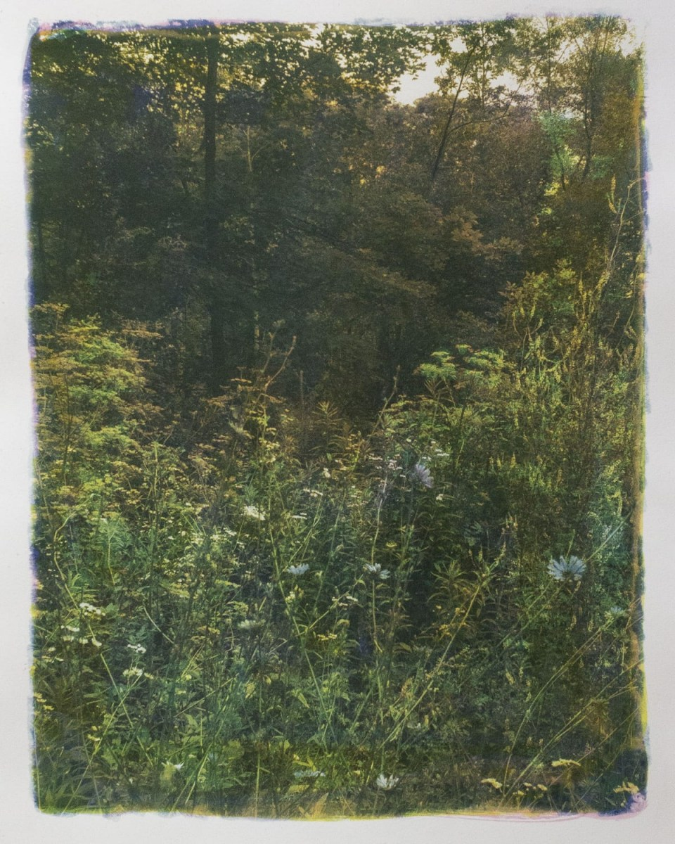 """Along the Road 21,"" 2019. Gum Bichromate over Cyanotype"
