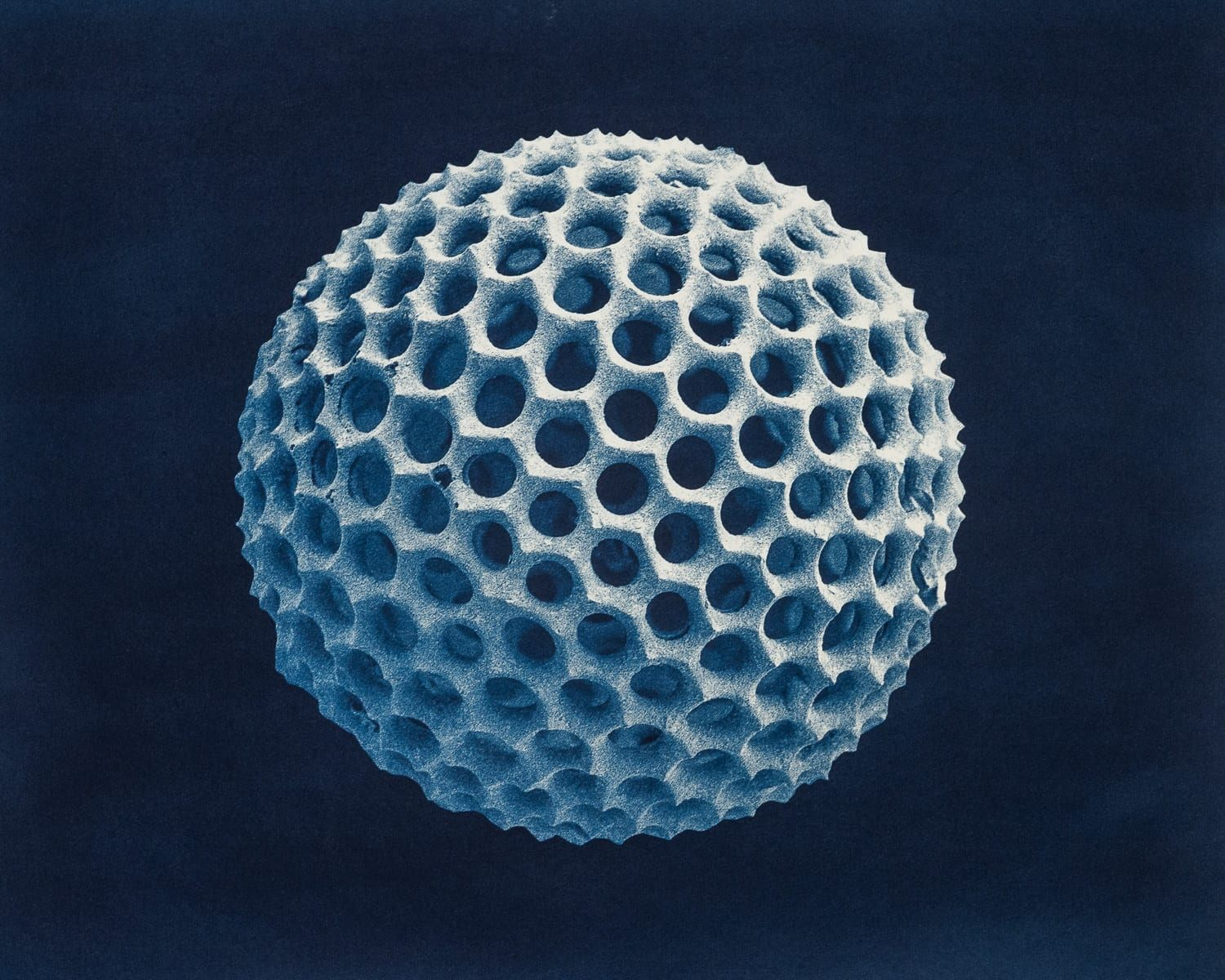 """Radiolaria I,"" 2019. Cyanotype from a scanning electron microscope"