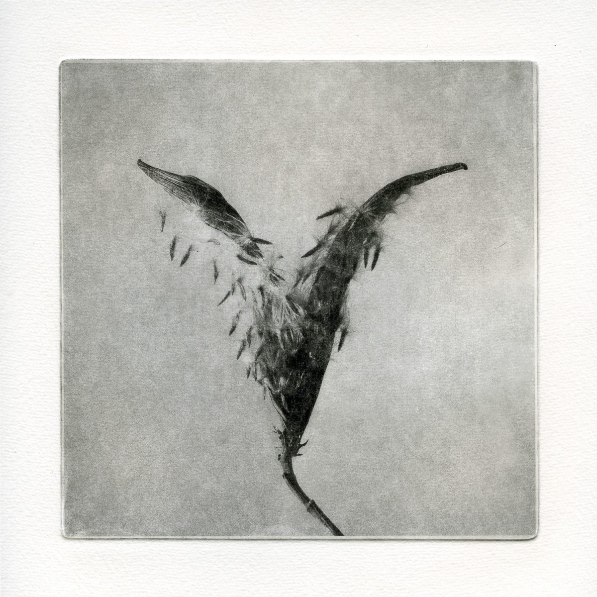 """Grana: 5400,"" 2019. Copperplate Photogravure"