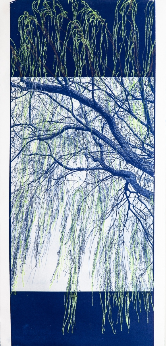 """""""Willow"""", 2020. Cyanotype and oil pastel."""