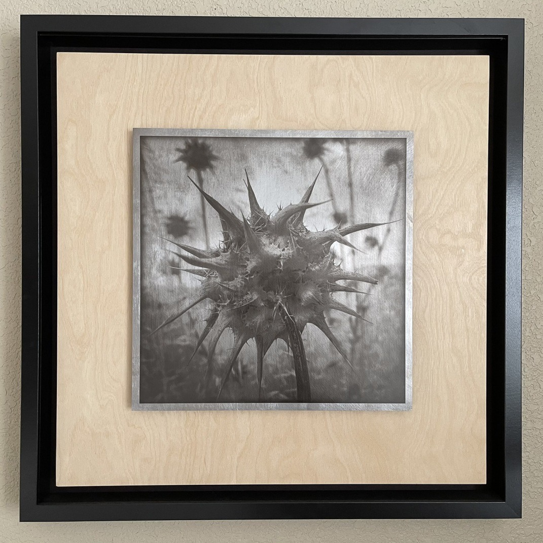 """""""Thistle"""", 2020. Carbon transfer on distressed aluminum mounted on a wooden panel."""