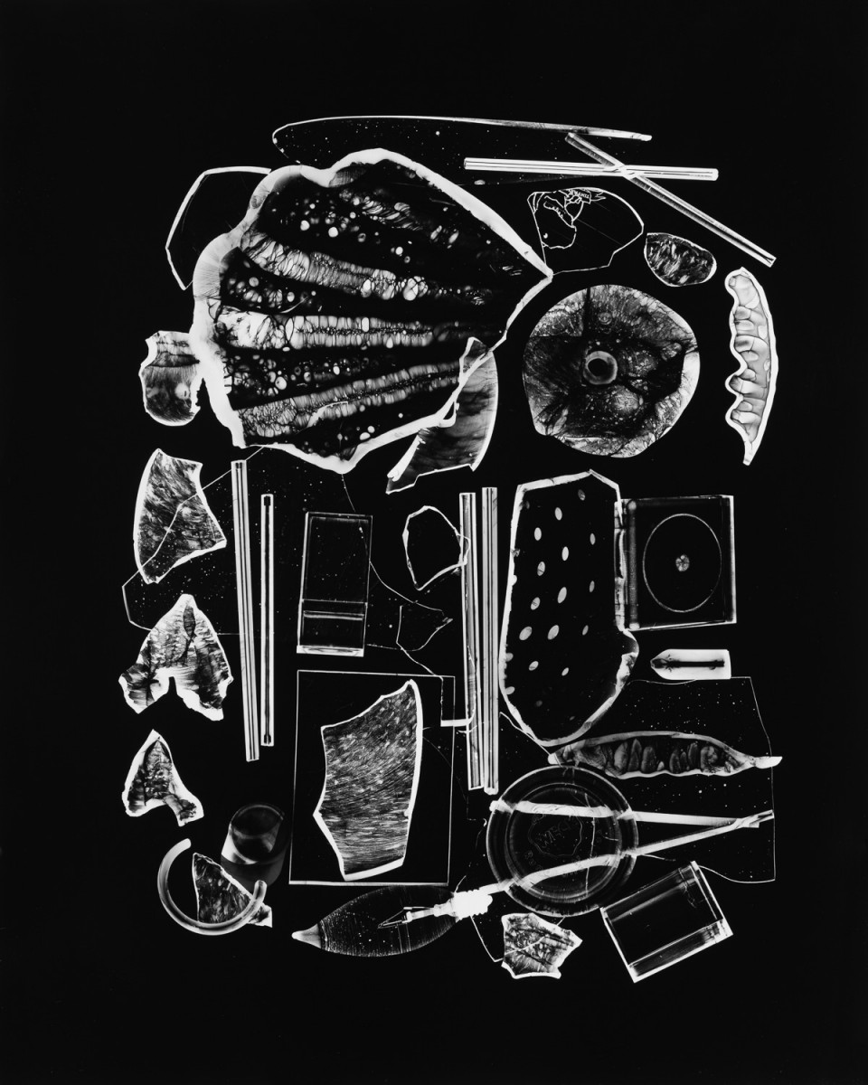 Photogram © Sarah Rose Weitzman