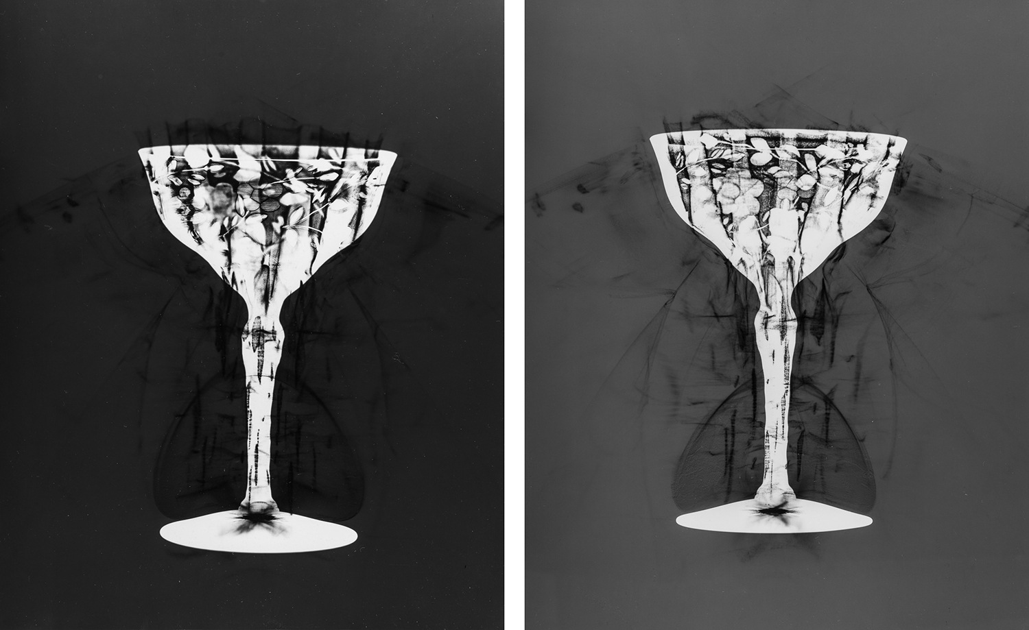 Photograms © Sarah Rose Weitzman