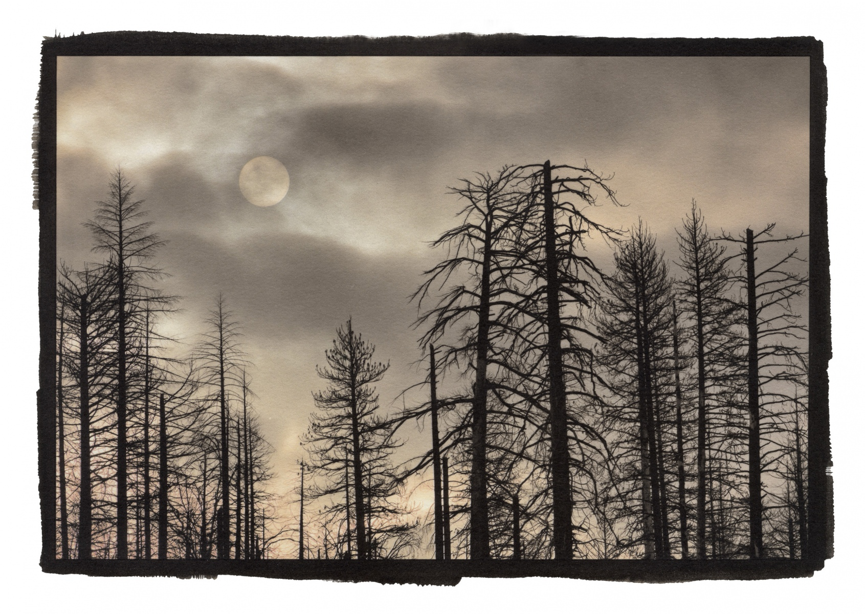 """Burnt Trees and Sun, Yosemite\"""