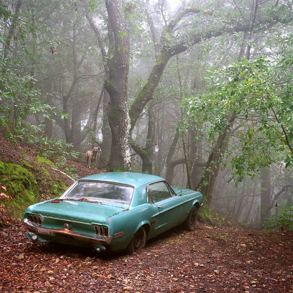 """Fiji & the Mustang, Big Sur, CA"" Photo © Lucy Goodhart 