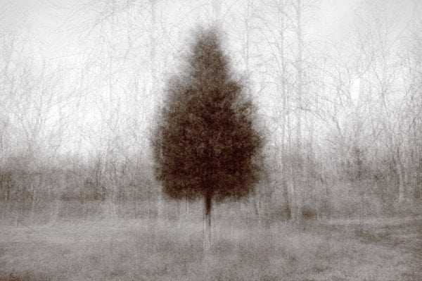 """Why are we so similar and why are we drawn so to the tree?"" Photo © Kent Krugh."