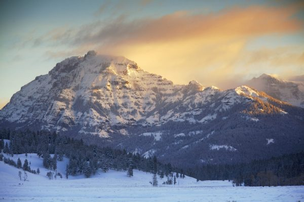 Yellowstone Winter Landscape and Wildlife Photography Workshop from The Image Flow in Mill Valley, CA