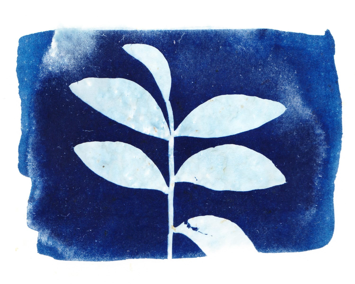Photography and Art Camp for Kids 2020. Marin, San Francisco. Cyanotype print
