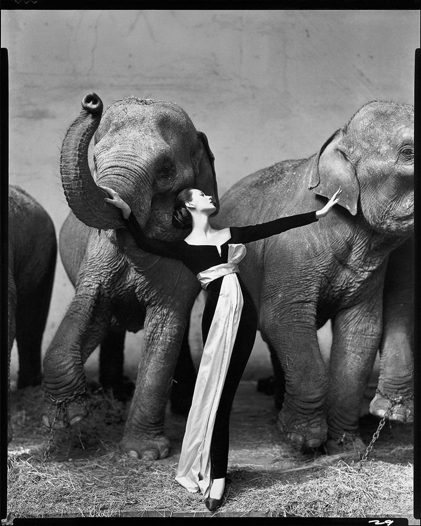 Masters of Photography: 2019 Lecture Series with Jeffrey Martz. Photo © Richard Avedon